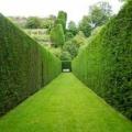 10 Незвичайних рослин для красивої живоплоту
