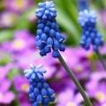 7 Красивих рослин, що цвітуть у квітні