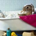 Банний день або все про купання декоративних кроликів