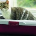 Що робити при проносі у кішки?