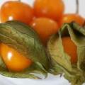 Фізаліс вирощування з насіння в домашніх умовах