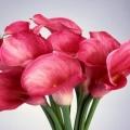 Як змінити колір квітів?