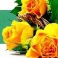 Які саджанці троянд краще?