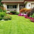 Коли найкраще облаштовувати газон на ділянці