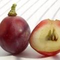 Масло виноградної кісточки для особи: рецепти домашніх масок для проблемної шкіри, що в`яне