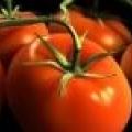 Плануємо посадку насіння томатів для розсади