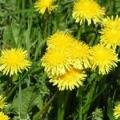 Простий шлях до красивого газону: поради з укладання рулонів, правила догляду