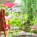 Рослини для оформлення садового ставка