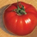 Сорт томата: великий брат f1