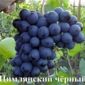 Сорт винограду: цимлянський чорний