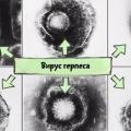 Вірус герпесу - не просто легка шкірна хвороба. Насправді він небезпечніше, ніж ти думав!