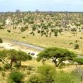 Вплив рослинності в саванах на глобальний клімат