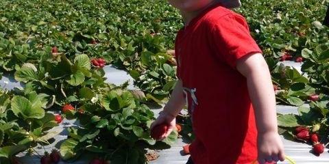 Коли можна давати дитині полуницю і чи можна взагалі?