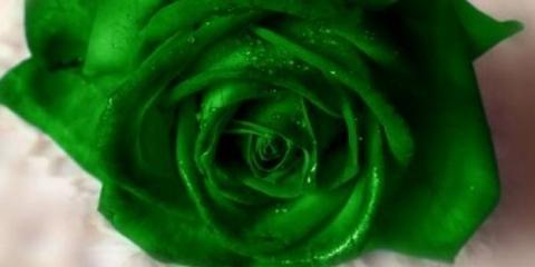 Зелені виділення у жінок: причини появи